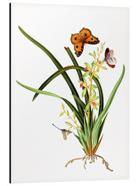 Cuadro de aluminio  Butterflies and a dragonfly on a plant