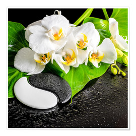 Póster  Spa arrangement with white orchid