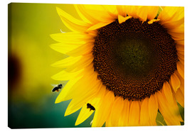 Lienzo  Two bees in sunflower