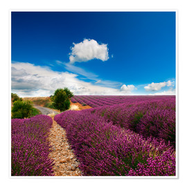 Póster  Beautiful lavender field