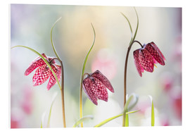 Cuadro de PVC  Snakes head fritillary - Mandy Disher