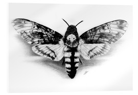 Cuadro de metacrilato  Death Head Hawk Moth - Christian Klute