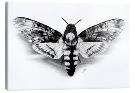 Lienzo  Death Head Hawk Moth - Christian Klute