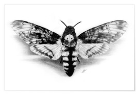 Póster  Death Head Hawk Moth - Christian Klute