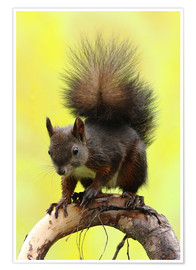 Uwe Fuchs - Squirrel on a branch