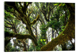 Cuadro de metacrilato  Old virgin forest, laurel, Madeira - Dennis Fischer