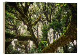 Cuadro de madera  Old virgin forest, laurel, Madeira - Dennis Fischer