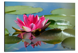 Cuadro de aluminio  Water lily with reflection - GUGIGEI