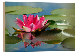 Cuadro de madera  Water lily with reflection - GUGIGEI