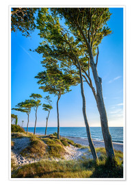 Póster Baltic Sea Beach with Trees