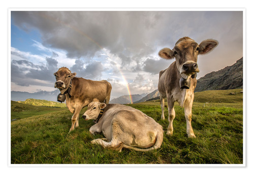 Póster Rainbow and cows, Valtellina, Lombardy, Italy