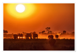 Póster Elephants at sunset, Chobe Park, Botswana, Africa