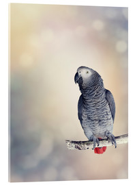 Cuadro de metacrilato  African Grey on a branch