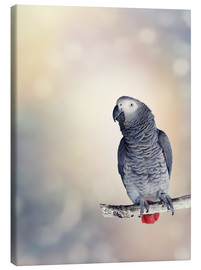 Lienzo  African Grey on a branch