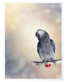 Póster African Grey on a branch