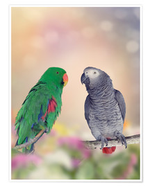 Póster Graupapagei and precious parrot on branches