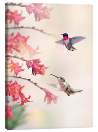 Lienzo  Hummingbirds and flowers