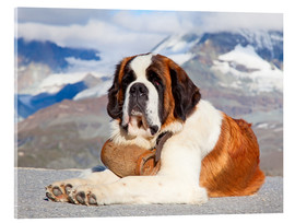 Cuadro de metacrilato  Saint Bernard Rescue Dog