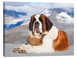 Lienzo  Saint Bernard Rescue Dog