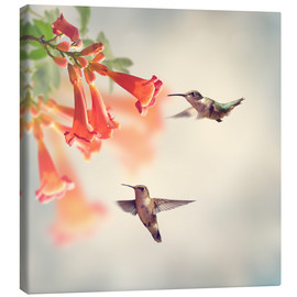 Lienzo  Hovering hummingbirds