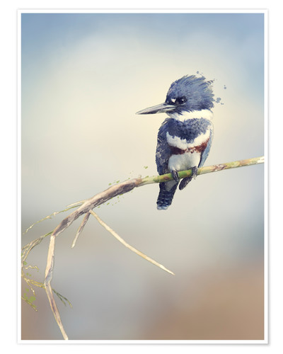 Póster Digital Painting Of Belted Kingfisher