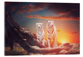 Cuadro de metacrilato  Two white tigers