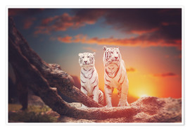 Póster Two white tigers