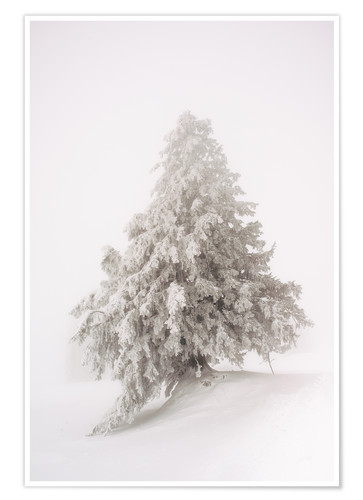 Póster Single snow covered tree in thick fog in winter  Rigi, Switzerland