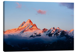 Lienzo  Schreckhorn alpen glow at sunset  View from First, Grindelwald, Switzerland - Peter Wey