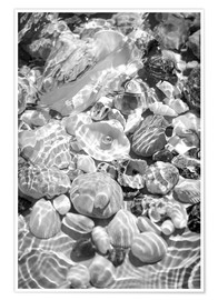 Póster Shells under water
