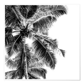 Póster  High palms on a tropical beach