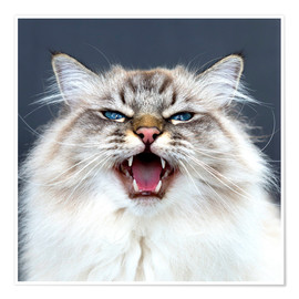 Póster Meow