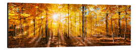 Cuadro de aluminio  Autumnal forest panorama in sunlight - Jan Christopher Becke