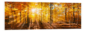 Cuadro de PVC  Autumnal forest panorama in sunlight - Jan Christopher Becke