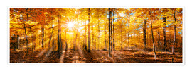 Póster  Autumnal forest panorama in sunlight - Jan Christopher Becke