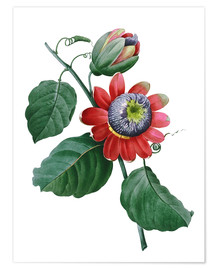 Póster passionflower