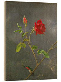 Cuadro de madera  Hummingbird on a rose - Martin Johnson Heade