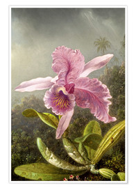 Póster  Hummingbird and orchid (detail) - Martin Johnson Heade