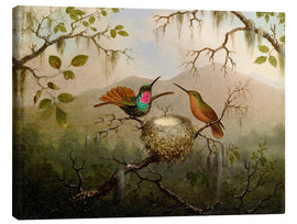 Lienzo  Two hummingbirds at their nest - Martin Johnson Heade