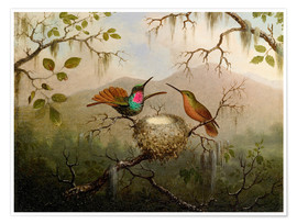 Póster  Two hummingbirds at their nest - Martin Johnson Heade