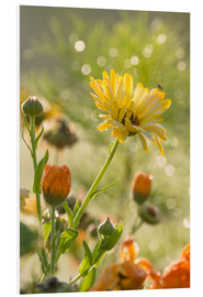Cuadro de PVC  Yellow and orange flowers in the morning - Edith Albuschat