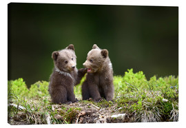 Lienzo  Two young brown bears