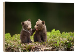 Cuadro de madera  Two young brown bears