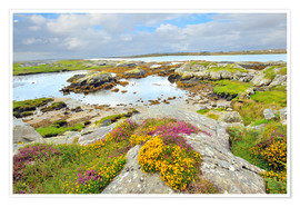 Póster  Ireland Landscape with wild flowers