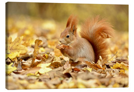 Lienzo  Red Squirrel in an urban park in autumn