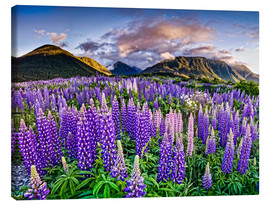 Lienzo  Lupines at Arthur's Pas