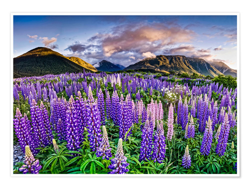 Póster Lupines at Arthur's Pas