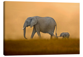 Lienzo  African Elephants mother with baby, Masai Mara - FLPA