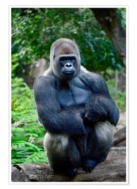 Póster  silverback sitting on tree trunk