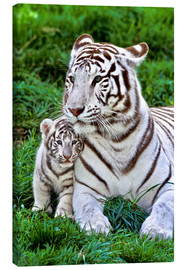 Lienzo  White Tiger, Mother with Cub - Gérard Lacz